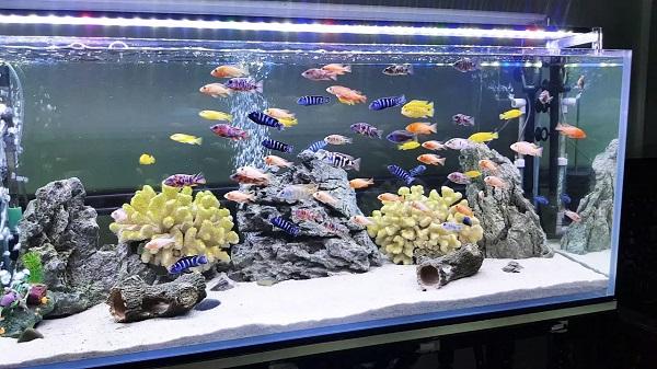 Tỷ lệ nước, cá và bộ lọc