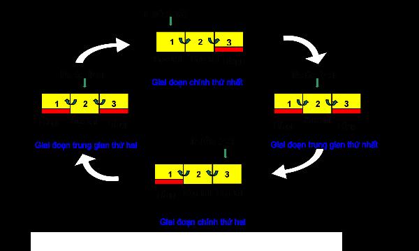 Phương pháp hiếu khí